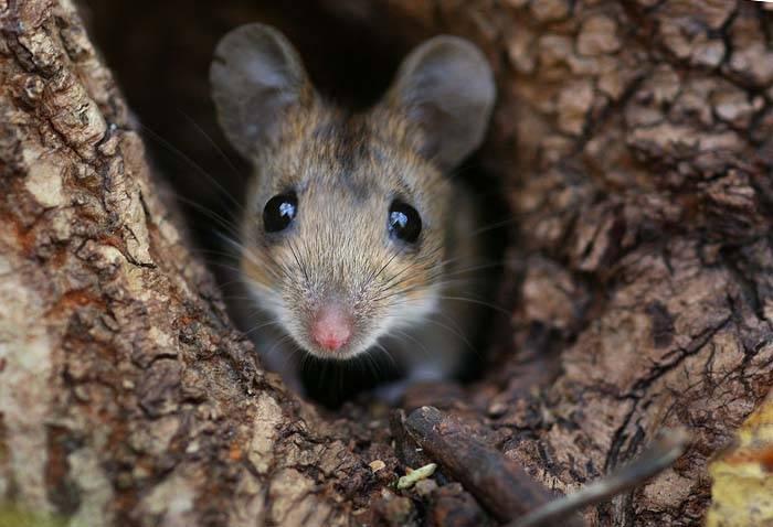 мышка в норке