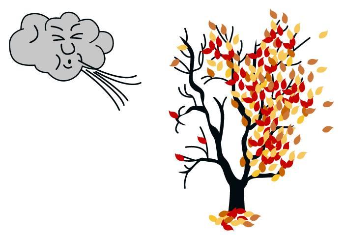 Ветер сдувает листья с дерева