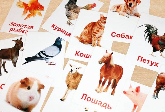 Карточки с животными по методике Домана