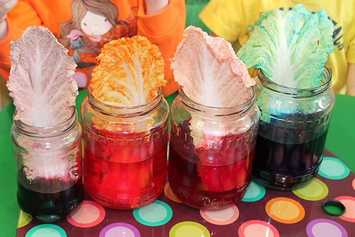 Опыт с цветной водой и листьями капусты
