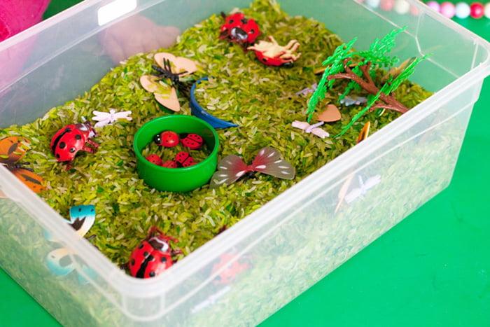 Сенсорная коробка с насекомыми