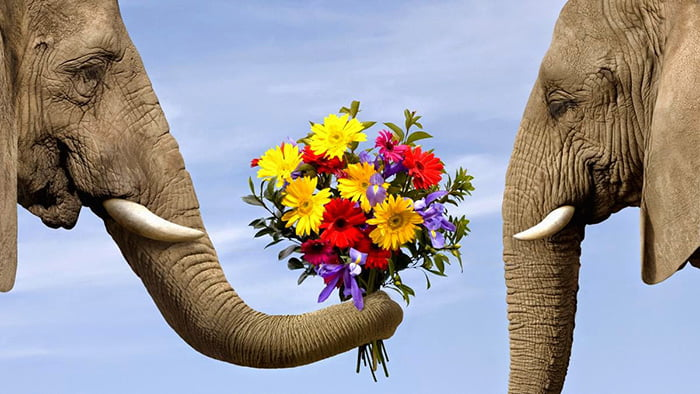 Слон дарит слонихе букет