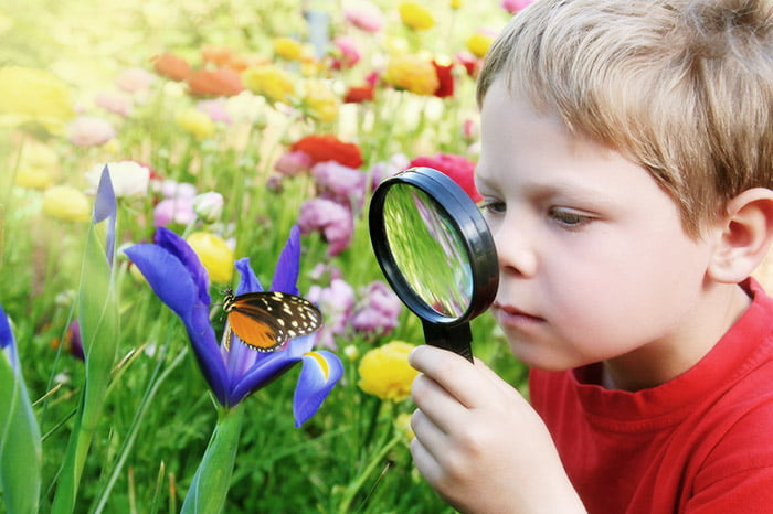 Ребенок рассматривает бабочку через лупу