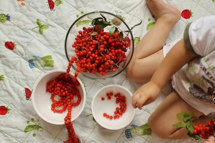 Ребенок играет с ягодами рябины