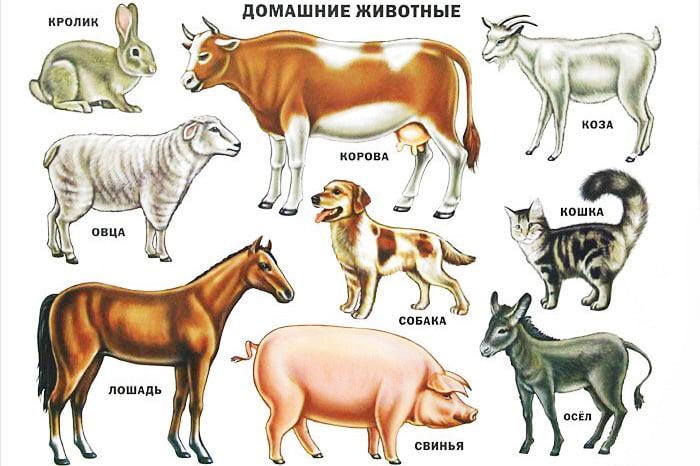 Изображения домашних животных
