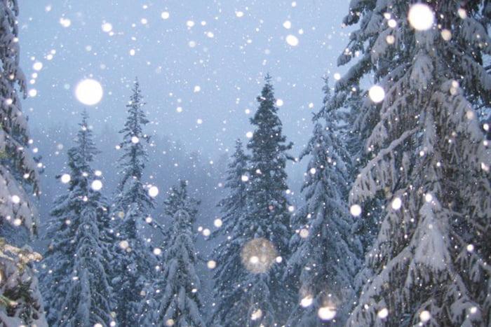 Зимняя ночь в лесу