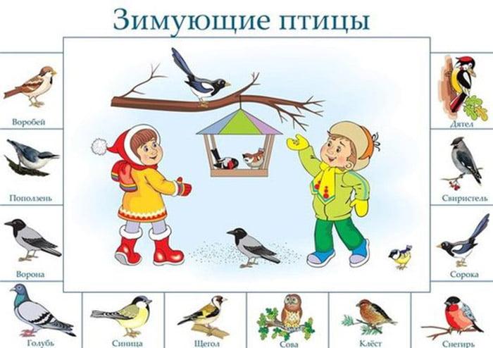 Картинки для детей - зимующие птицы