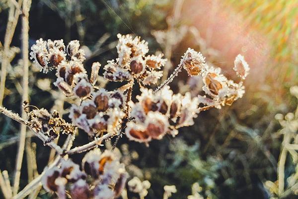 Осенние заморозки
