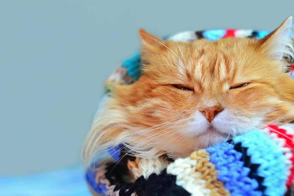 Рыжий кот укутан в вязаный шарф