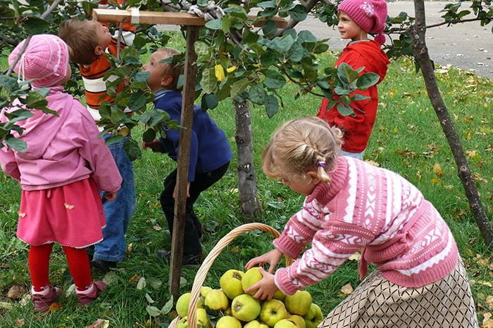 Дети собирают урожай яблок