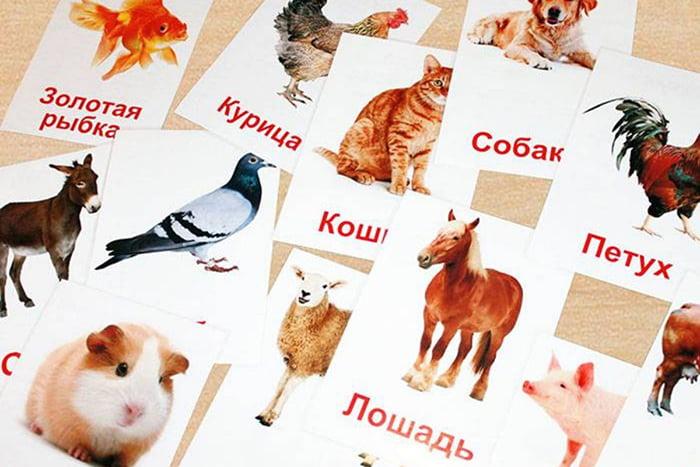 Карточки для обучения чтению по методике Домана
