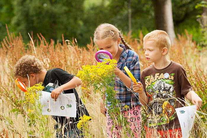 Дети изучают растения летом