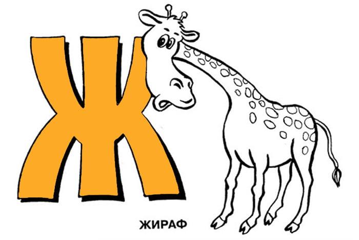 Жираф и буква Ж