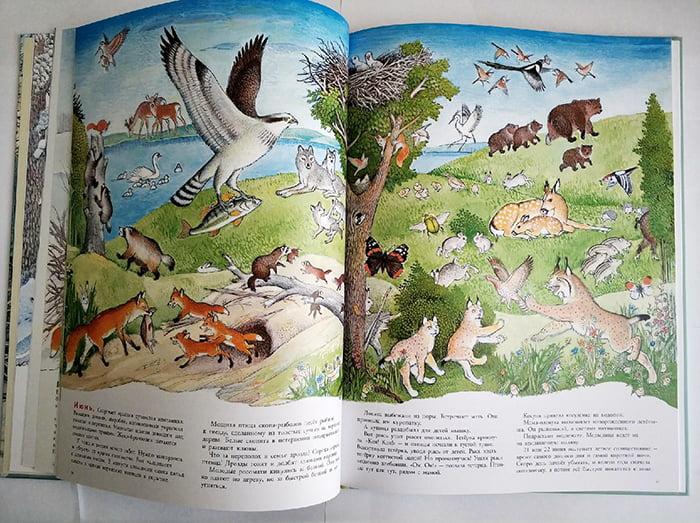 Разворот детской книги про животных