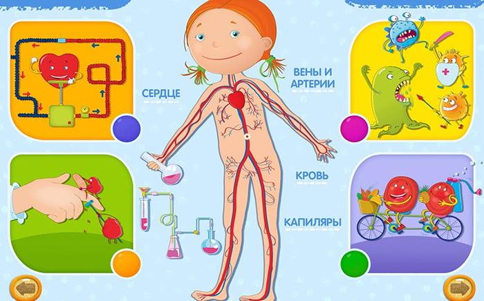 """Иллюстрация """"Строение человека"""" для детей"""