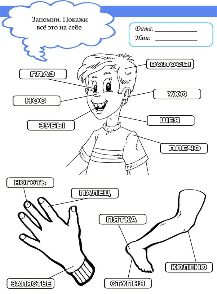 Упражнение на запоминание частей тела для детей