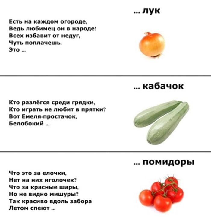 Загадки про лук, кабачок, помидоры