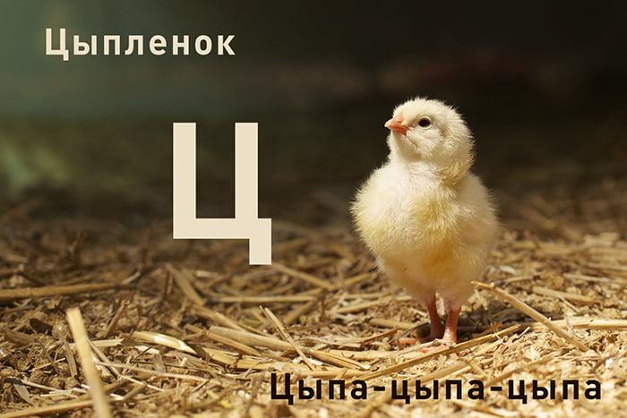 Цыпленок и буква Ц