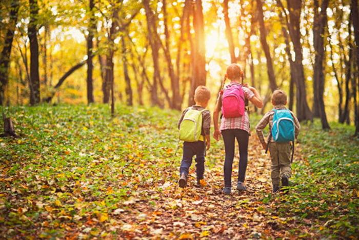 Дети на прогулке в лесу