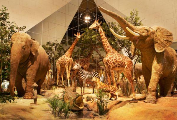 Зоологический музей Дарвина