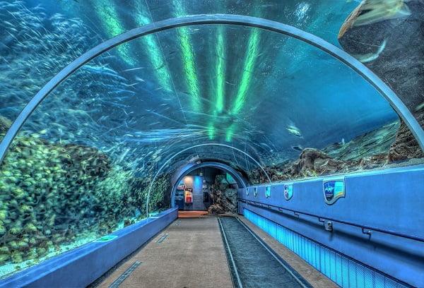 Океанариум Нептун в Санкт-Петербурге